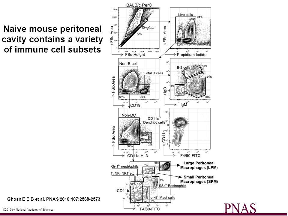 Naive mouse peritoneal cavity contains a variety of immune cell subsets
