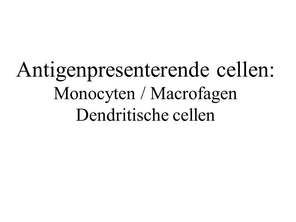 Antigenpresenterende cellen: Monocyten / Macrofagen Dendritische cellen