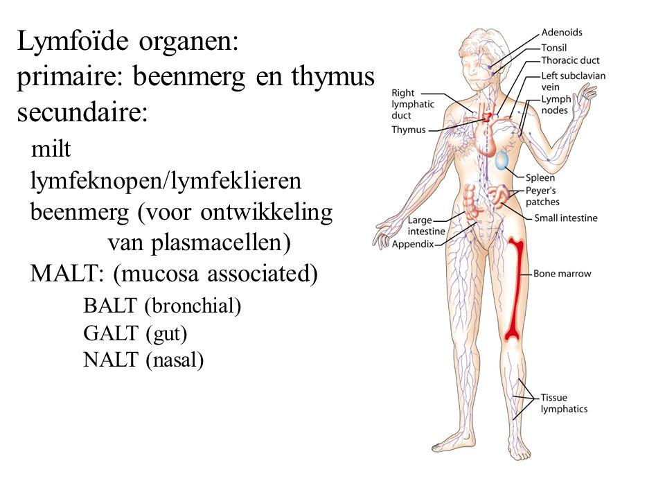 primaire: beenmerg en thymus secundaire: milt