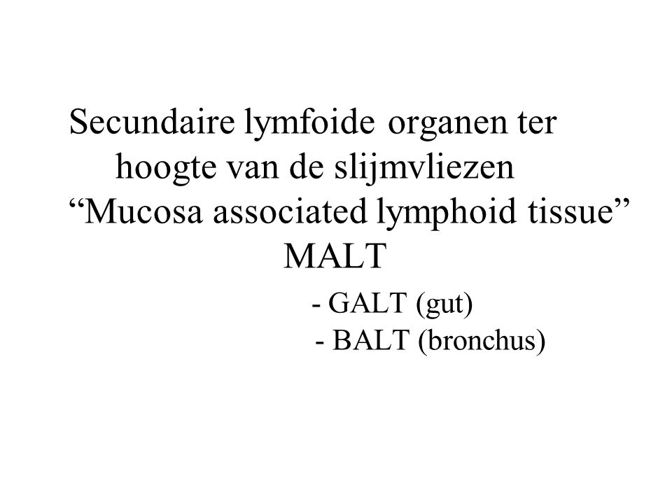 Secundaire lymfoide organen ter hoogte van de slijmvliezen Mucosa associated lymphoid tissue MALT - GALT (gut) - BALT (bronchus)