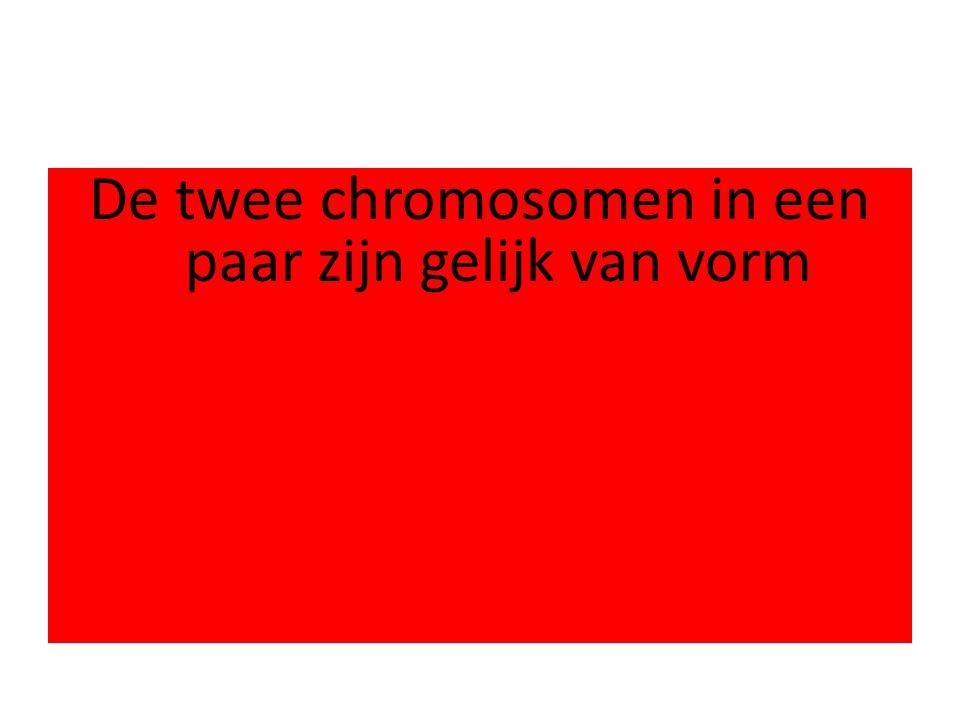 De twee chromosomen in een paar zijn gelijk van vorm