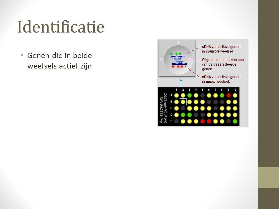 Identificatie Genen die in beide weefsels actief zijn