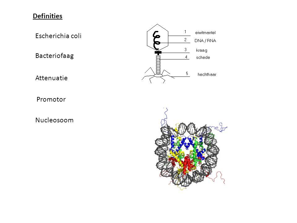 Definities Escherichia coli Bacteriofaag Attenuatie Promotor Nucleosoom