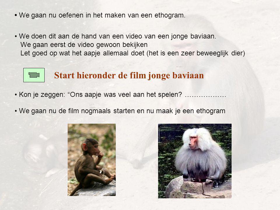 Start hieronder de film jonge baviaan