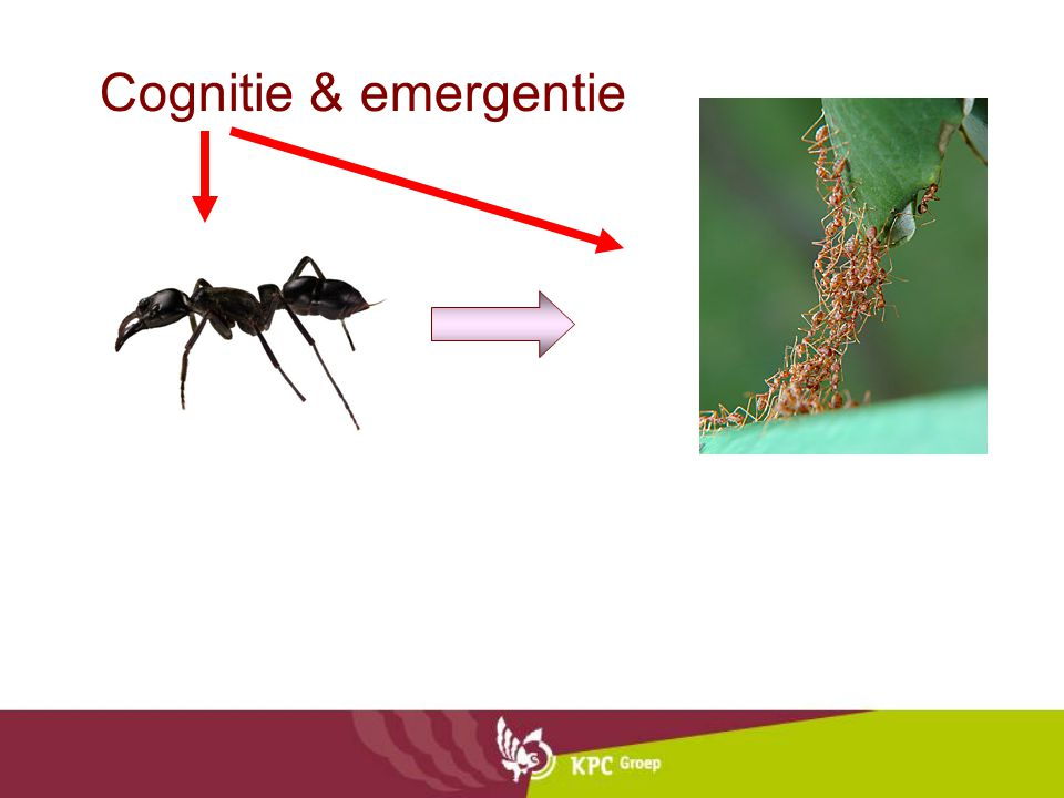 Cognitie & emergentie