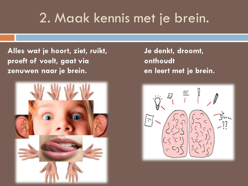 2. Maak kennis met je brein.