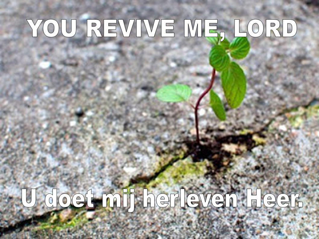 U doet mij herleven Heer.
