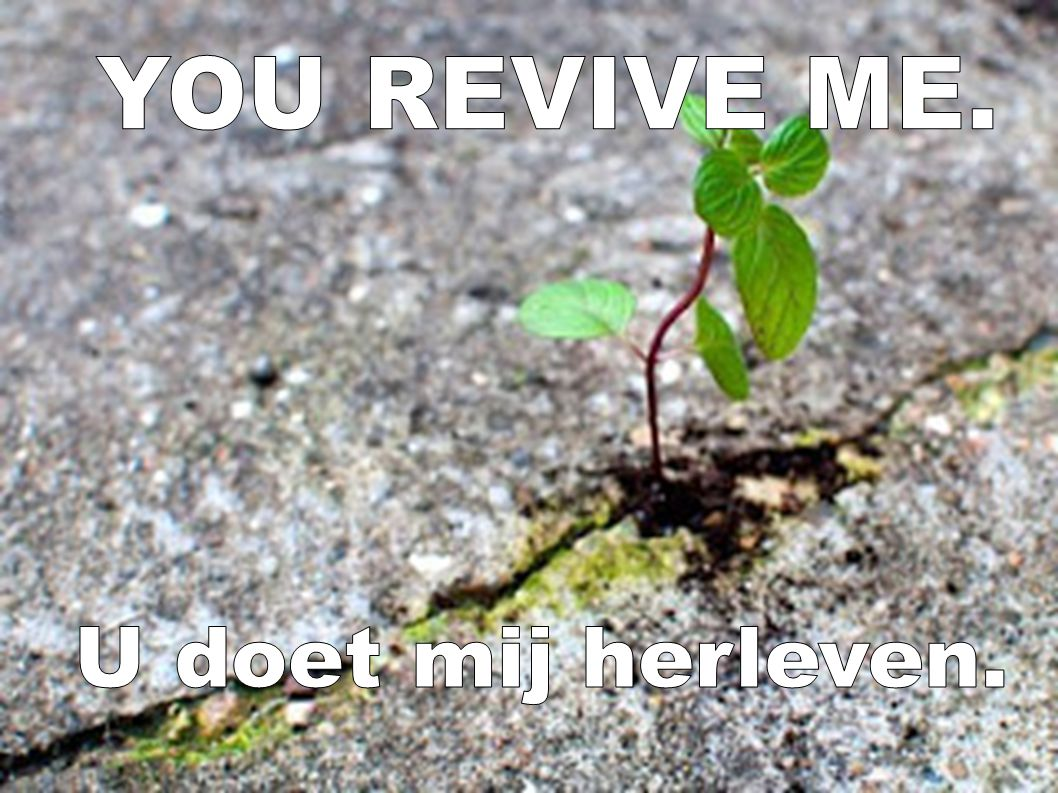 YOU REVIVE ME. U doet mij herleven.