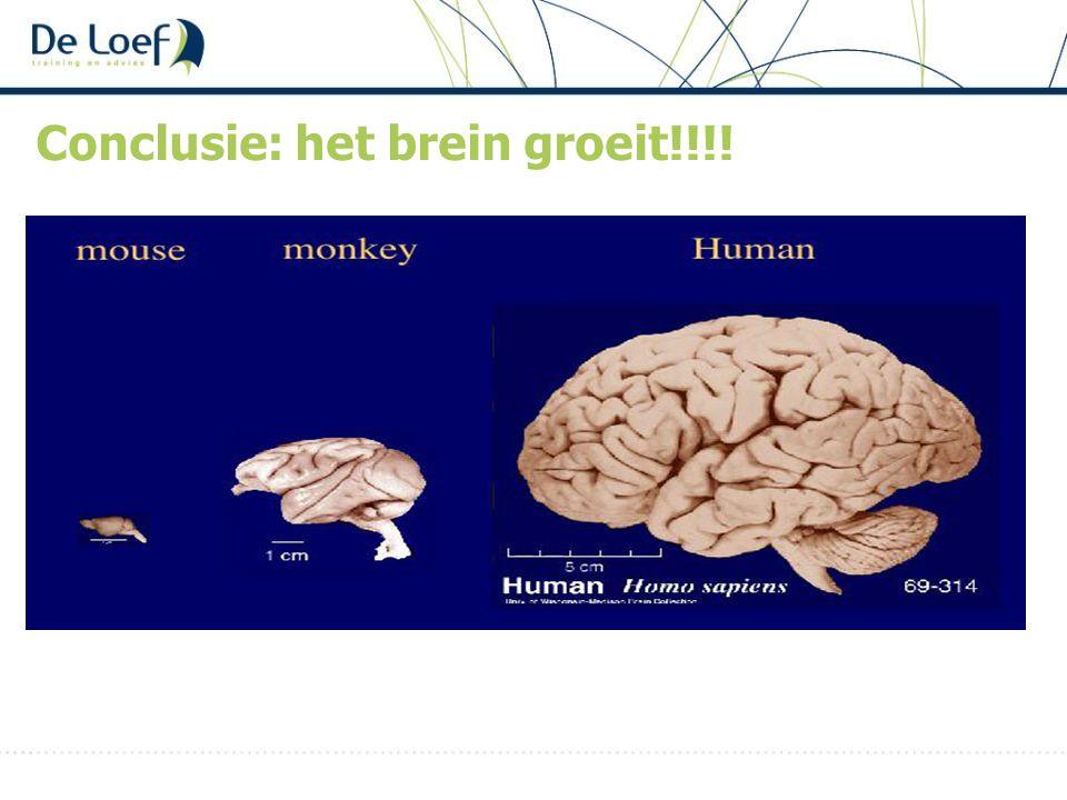 Conclusie: het brein groeit!!!!