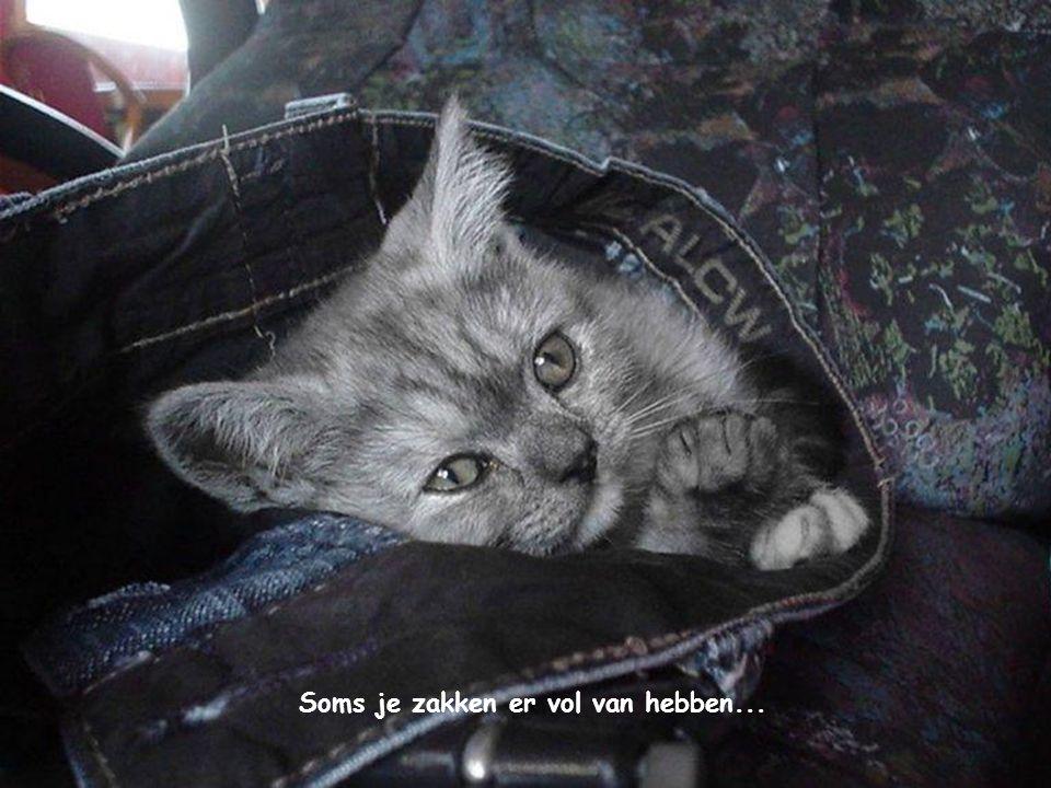 Soms je zakken er vol van hebben...