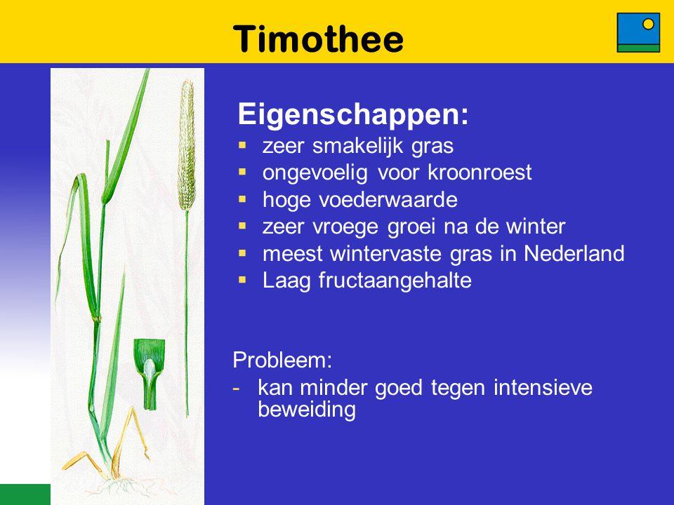 Timothee Eigenschappen: zeer smakelijk gras ongevoelig voor kroonroest