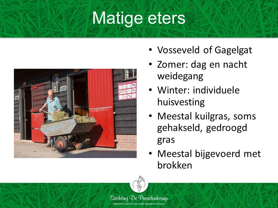 Matige eters Vosseveld of Gagelgat Zomer: dag en nacht weidegang