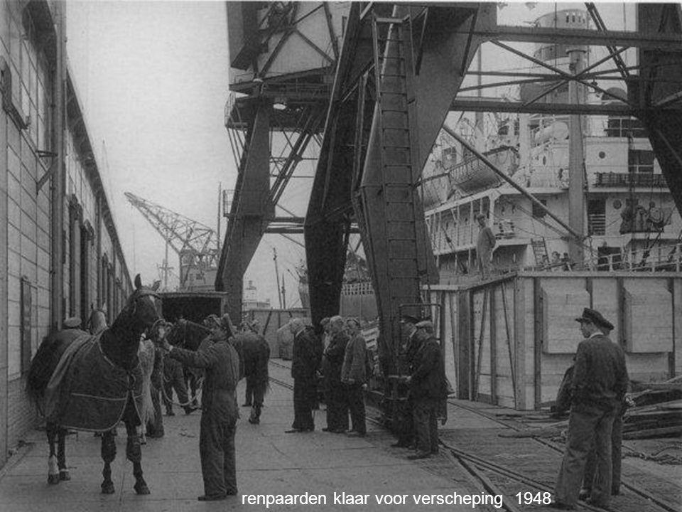 renpaarden klaar voor verscheping 1948