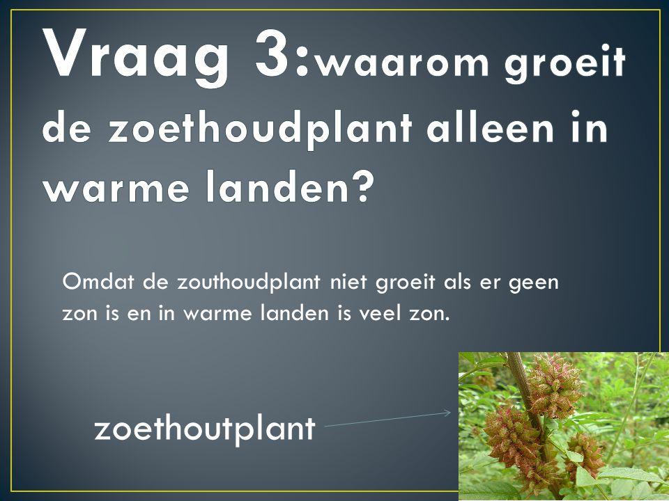 Vraag 3:waarom groeit de zoethoudplant alleen in warme landen