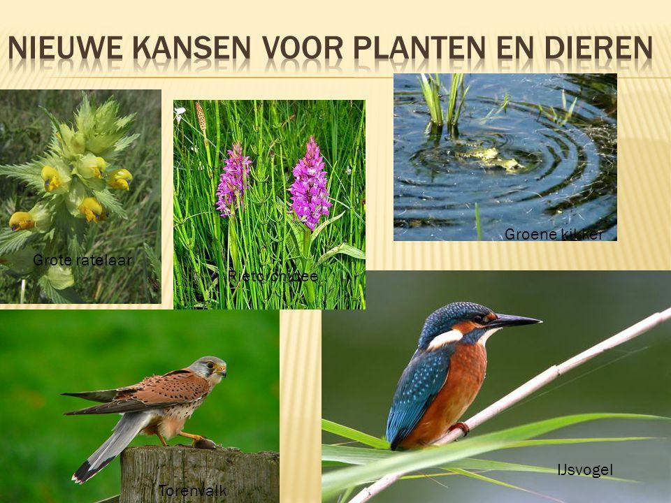 Nieuwe kansen voor planten en dieren