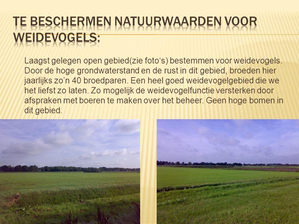 Te beschermen natuurwaarden voor WEIDEvogels: