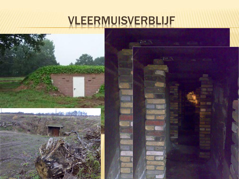 Vleermuisverblijf Natuur-en milieuvereniging Het Stroomdal 2008