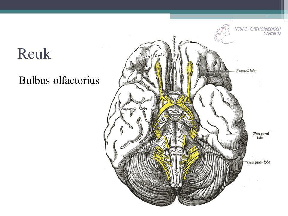 Reuk Bulbus olfactorius
