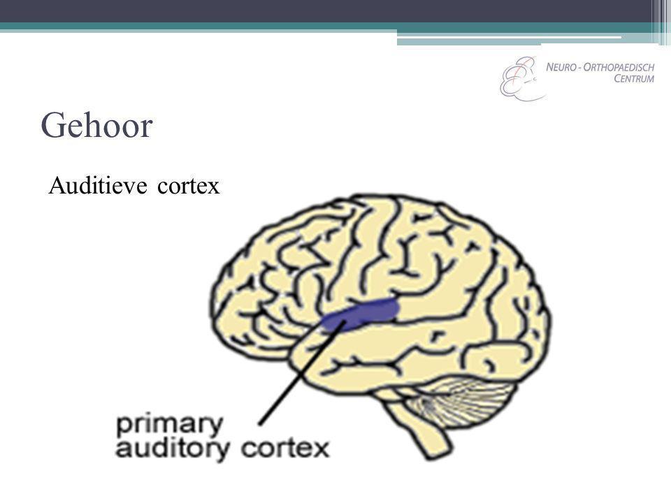 Gehoor Auditieve cortex