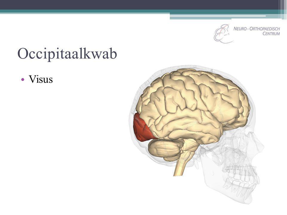 Occipitaalkwab Visus