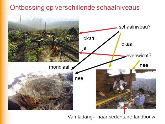 Ontbossing op verschillende schaalniveaus