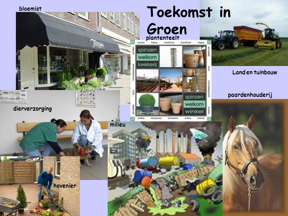 Toekomst in Groen bloemist plantenteelt Land en tuinbouw