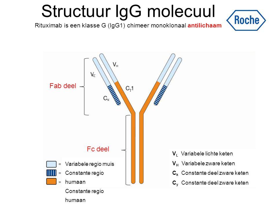 Structuur IgG molecuul Rituximab is een klasse G (IgG1) chimeer monoklonaal antilichaam