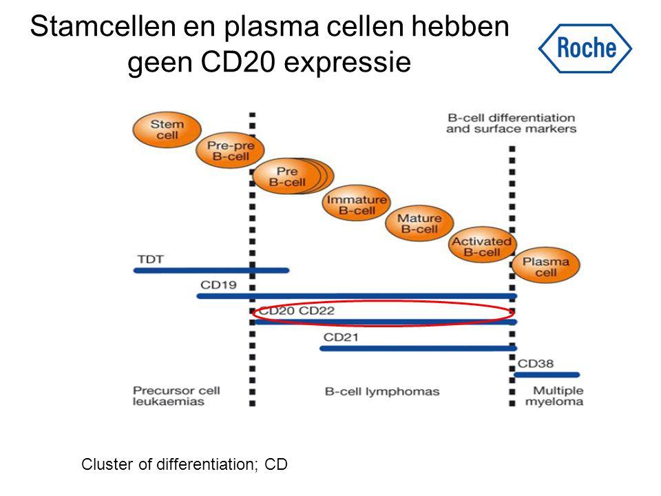 Stamcellen en plasma cellen hebben geen CD20 expressie