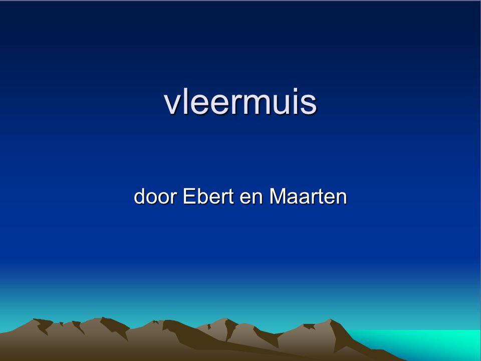 vleermuis door Ebert en Maarten