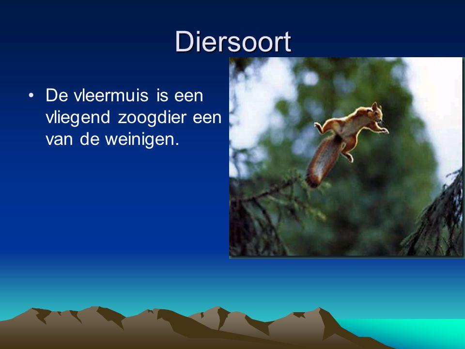 Diersoort De vleermuis is een vliegend zoogdier een van de weinigen.