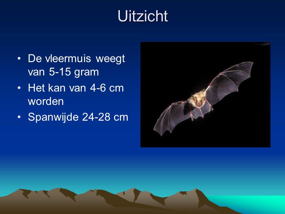 Uitzicht De vleermuis weegt van 5-15 gram Het kan van 4-6 cm worden