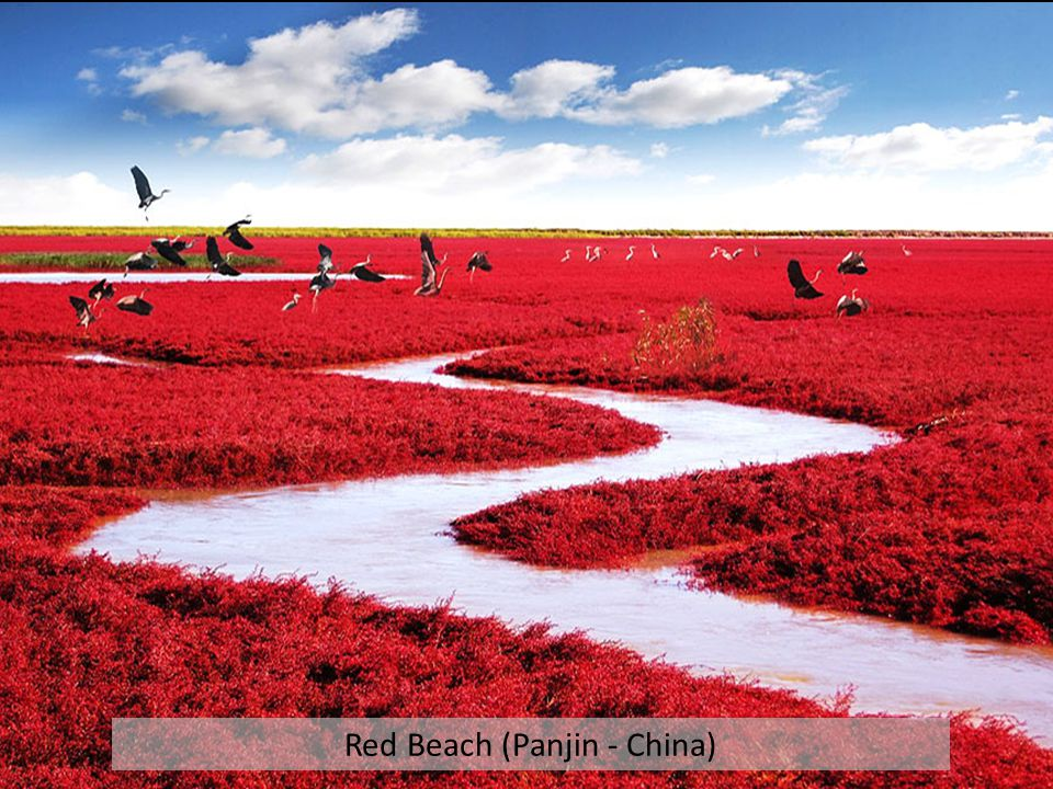 Red Beach (Panjin - China)