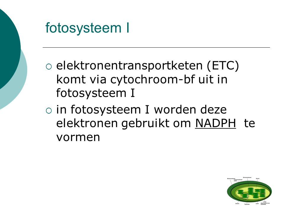fotosysteem I elektronentransportketen (ETC) komt via cytochroom-bf uit in fotosysteem I.