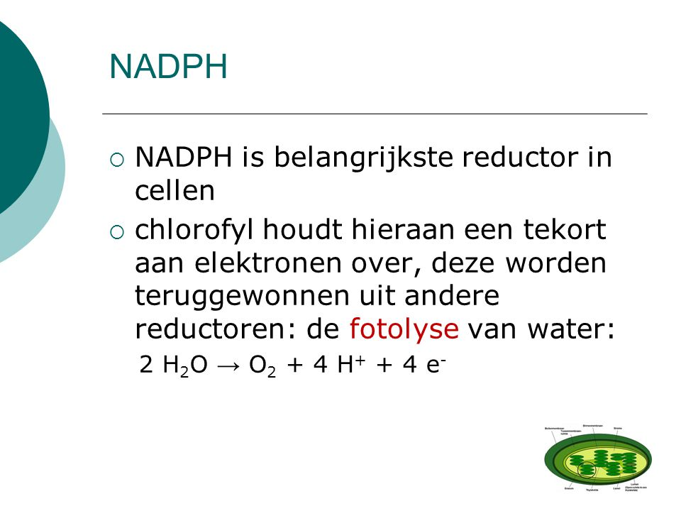 NADPH NADPH is belangrijkste reductor in cellen