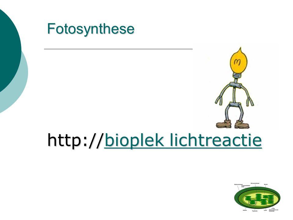 http://bioplek lichtreactie