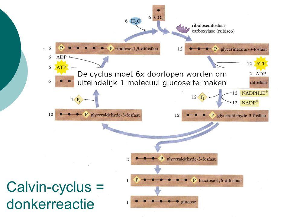 Calvin-cyclus = donkerreactie