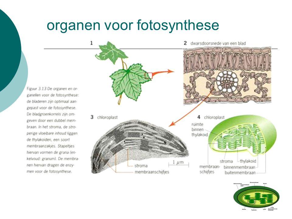 organen voor fotosynthese