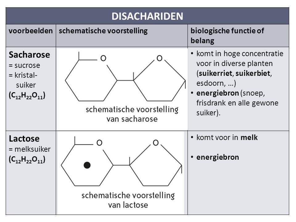 DISACHARIDEN Sacharose Lactose voorbeelden schematische voorstelling