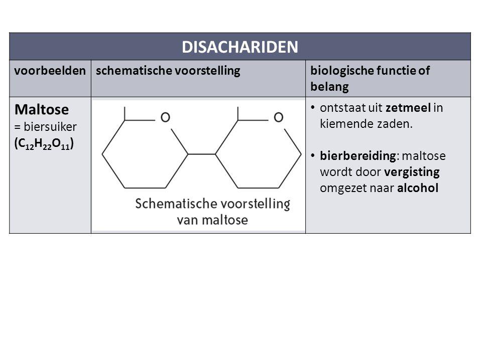 DISACHARIDEN Maltose voorbeelden schematische voorstelling