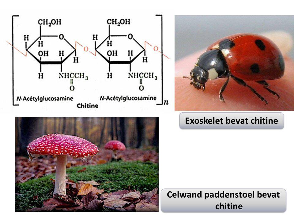 Exoskelet bevat chitine Celwand paddenstoel bevat chitine