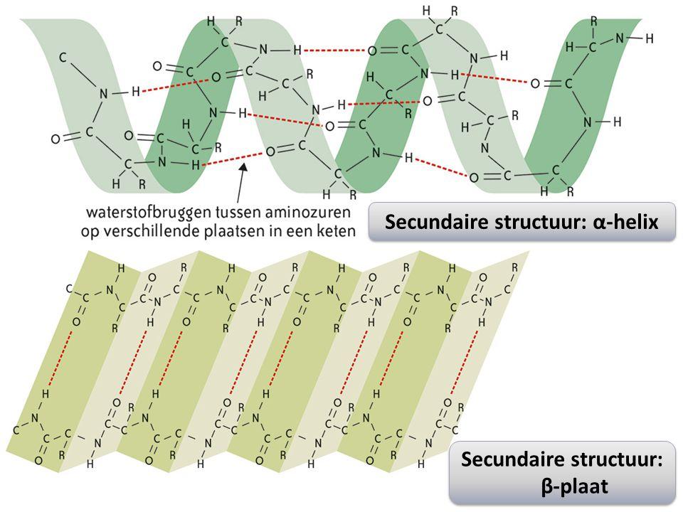 Secundaire structuur: α-helix Secundaire structuur: β-plaat