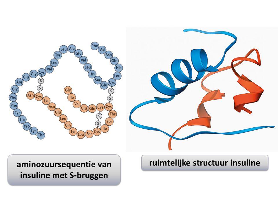aminozuursequentie van insuline met S-bruggen