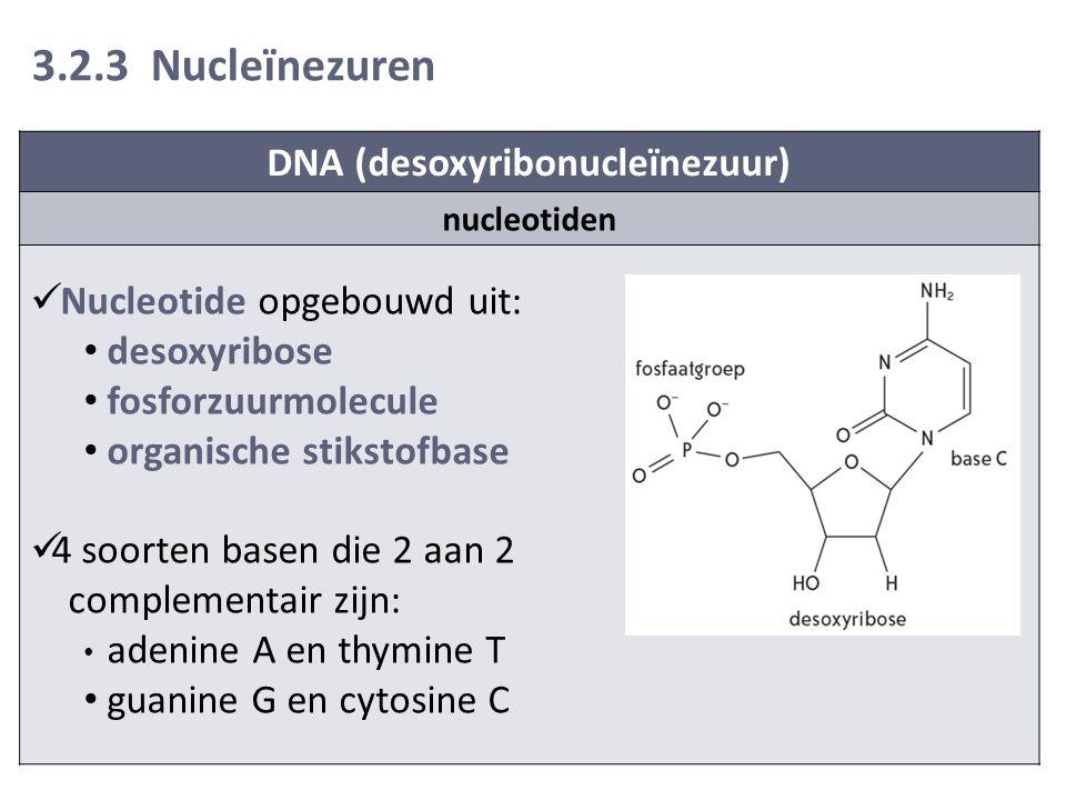 DNA (desoxyribonucleïnezuur)