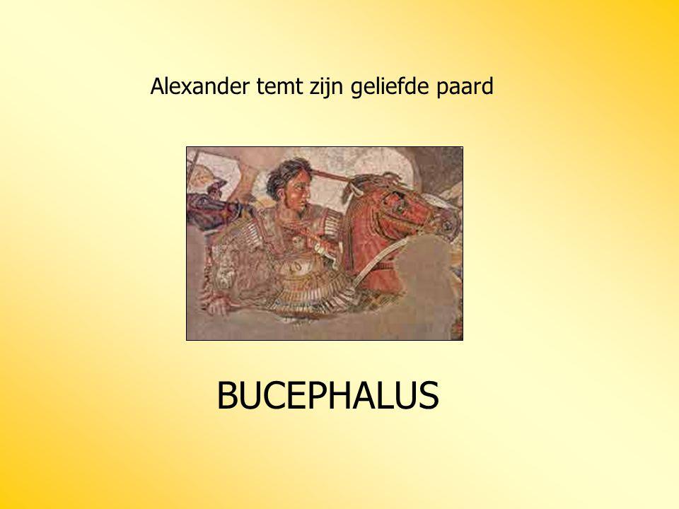 Alexander temt zijn geliefde paard