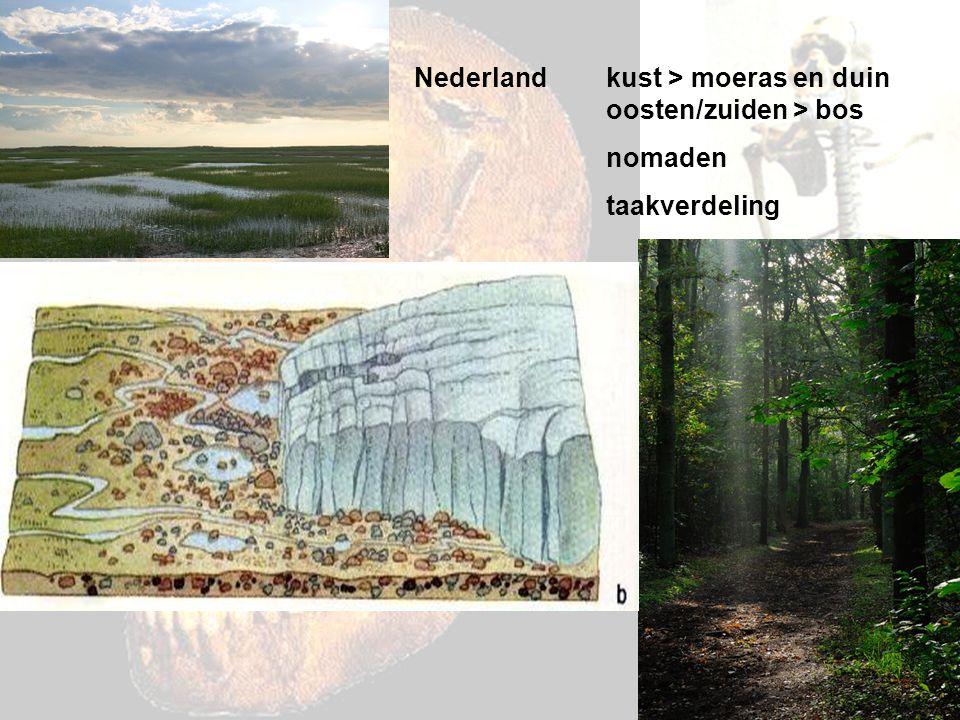 Nederland kust > moeras en duin oosten/zuiden > bos