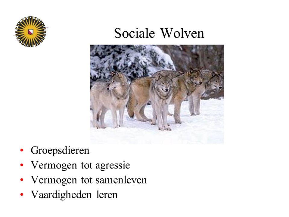 Sociale Wolven Groepsdieren Vermogen tot agressie