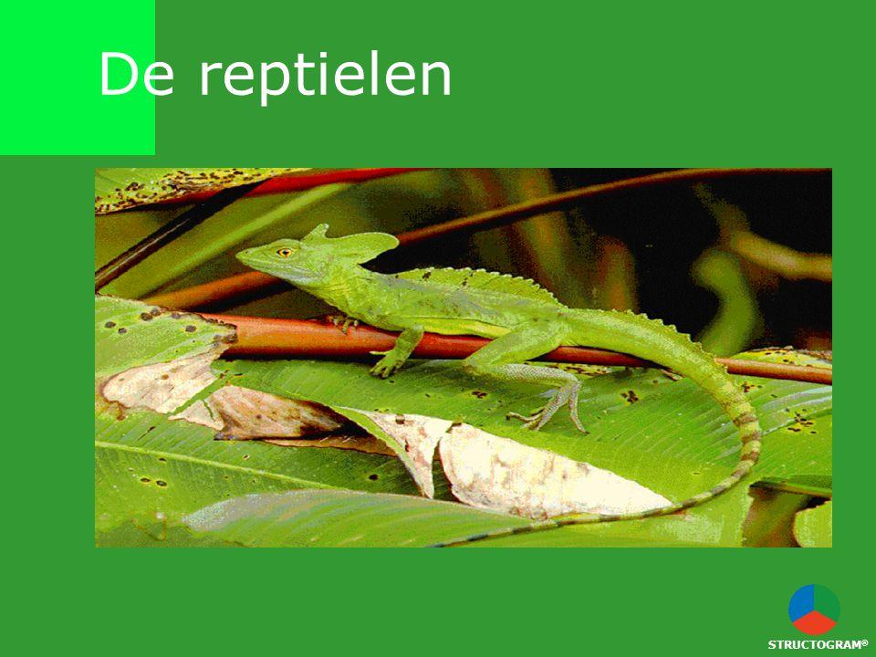De reptielen STRUCTOGRAM®