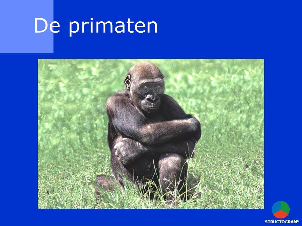 De primaten STRUCTOGRAM®