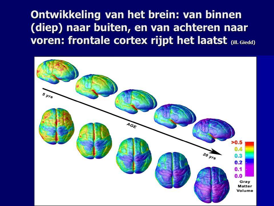 Ontwikkeling van het brein: van binnen (diep) naar buiten, en van achteren naar voren: frontale cortex rijpt het laatst (ill.