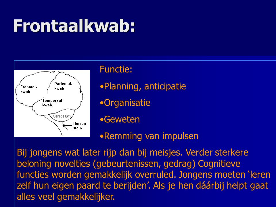 Frontaalkwab: Functie: Planning, anticipatie Organisatie Geweten